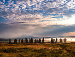 The fog helps to create a beautiful sunrise in Yellowstone.
