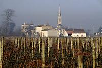 Europe/France/Aquitaine/33/Gironde/Pomerol: Le vignoble de château Petrus