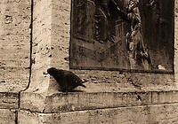File Photo Montreal (Quebec) CANADA<br /> bird on a monument in downtown Montreal<br /> Photo (c) P Roussel / Images Distribution