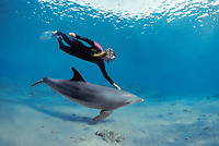 Snorkeler swimming with Bottlenose Dolphin, Tursiops truncatus, Nuweiba, Egypt, Red Sea., Northern Africa