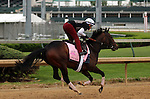 LOUISVILLE, KY - APRIL 20: Lewis Bay (Bernardini x Summer Raven, by Summer Squall) exercises in preparation for the Kentucky Oaks at Churchill Downs, Louisville KY. Owner Alpha Delta Stables, trainer Chad C. Brown. (Photo by Mary M. Meek/Eclipse Sportswire/Getty Images)