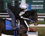 Rachel Alexandra jogs Monday morning, January 4, 2009 at Fair Grounds in New Orleans, LA. Exercise rider Dominic Terry is aboard..©ALEXANDER BARKOFF