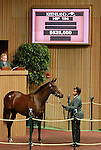 September 09, 2014: Hip #194 Distorted Humor - Rebridled Dreams consigned by Beau Lane Bloodstock sold for $525,000 to Spendthrift Farm at the Keeneland September Yearling Sale.   Candice Chavez/ESW/CSM