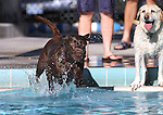 Guage watches as Lady leaps into the pool during the second annual Pooch Plunge at the Carson City Aquatic Center in Carson City, Nev., on Saturday, Sept. 18, 2010..Photo by Cathleen Allison