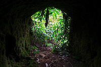 A tunnel along a Kohala Forest Reserve trail in Waipi'o Valley, Hawai'i Island.