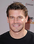 David Boreanaz at Stand Up to Cancer held at Sony Picture Studios in Culver City, California on September 10,2010                                                                               © 2010 Hollywood Press Agency