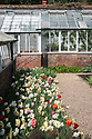Spring bulbs and greenhouses, Hinton Ampner, Hampshire, late April.