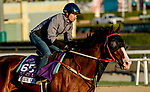 October 28, 2019 : Breeders' Cup Dirt Mile entrant Blue Chipper, trained by Kim Young Kwan, exercises in preparation for the Breeders' Cup World Championships at Santa Anita Park in Arcadia, California on October 28, 2019. John Voorhees/Eclipse Sportswire/Breeders' Cup/CSM