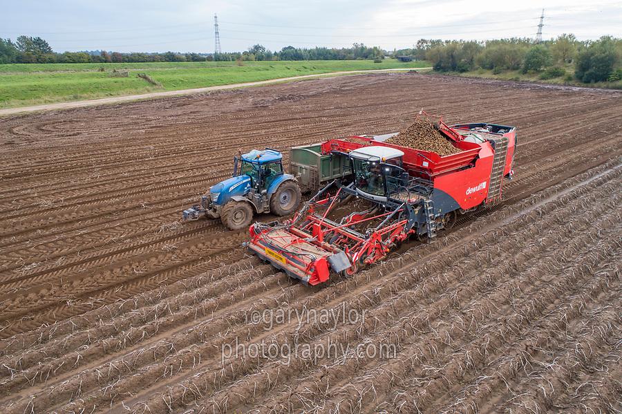 Self propelled potato harvesting - Lincolnshire, October