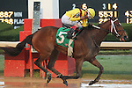 HOT SPRINGS, AR - MARCH 12: Terra Promessa #5 with jockey Ricardo Santana Jr. crossing the finish line in the Honeybee Stakes at Oaklawn Park on March 12, 2016 in Hot Springs, Arkansas. (Photo by Justin Manning)