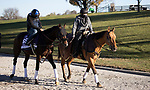 November 4, 2020: Jesus' Team, trained by trainer Jose Francisco D'Angelo, exercises in preparation for the Breeders' Cup Dirt Mile at Keeneland Racetrack in Lexington, Kentucky on November 4, 2020. Alex Evers/Eclipse Sportswire/Breeders Cup