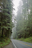 Road Through Redwoods