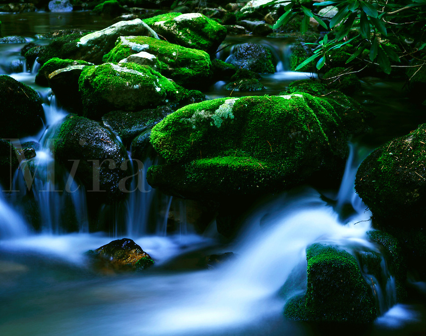 Creek in Dolly Ann Hollow George Washington National Forest Virginia