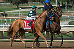 ARCADIA, CA. SEPTEMBER 30:  #1 Shenandoah Queen, ridden by Tyler Baze, in the post parade of the Zenyatta Stakes (Grade l) on September 30, 2018, at Santa Anita Park in Arcadia, CA.(Photo by Casey Phillips/Eclipse Sportswire/CSM)