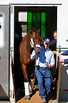 October 19, 2015:  Beholder arrives at Keeneland Racecourse for the Breeder's Cup Classic for trainer Richard Mandella.  Candice Chavez/ESW/CSM