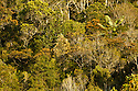 Primary rain forest. Andasibe-Mantadia National Park, eastern Madagascar.