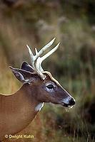 MA11-012x  White-tailed Deer - male - Odocoileus virginianus
