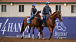 DEL MAR, CA - NOVEMBER 01: Snapper Sinclair, owned by Bloom Racing Stable LLC and trained by Steven M. Asmussen, exercises in preparation for Breeders' Cup Juvenile Turf  at Del Mar Thoroughbred Club on November 1, 2017 in Del Mar, California. (Photo by Scott Serio/Eclipse Sportswire/Breeders Cup)
