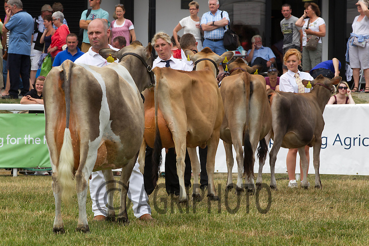 Jersey classes at the Royal Welsh Show 2013<br /> Picture Tim Scrivener 07850 303986