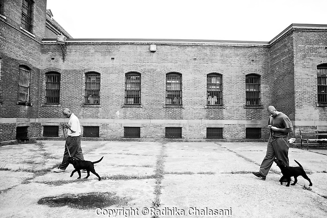 BEACON, NEW YORK:  Tyrone (R) and Mike walk Happy and Annie  around the courtyard to teach them not to respond to distractions as balls are thrown around during a training class for the Puppies Behind Bars (PPB) program at Fishkill Correctional Facility. The  program prepares puppies to be service dogs and consists of one day of class a week on topics such as obedience training, grooming, basic care of the dogs. The dogs spend 18-20 months in the program working with the prisoners.