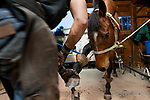 John Malmquist, farrier, works on Jasper, a five year old Thoroughbred. Cochecton, New York.  08/23/2019. Photo by Thierry Gourjon.