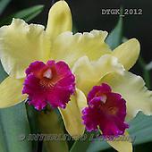 Gisela, FLOWERS, BLUMEN, FLORES, photos+++++,DTGK2012,#f#