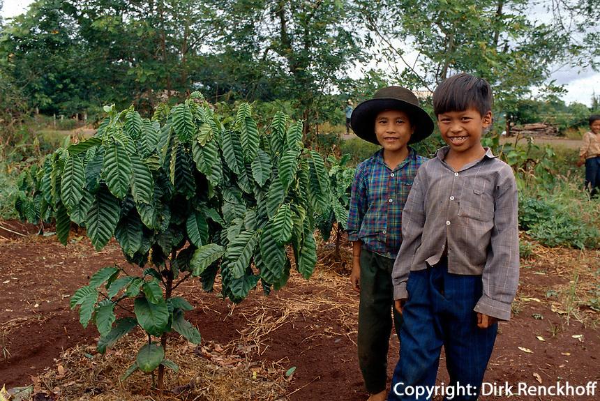 Kaffeeplantage, zentrales Hochland, Vietnam