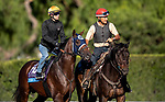 OCT 25: Breeders' Cup Juvenile  entrant Storm the Court, trained by Peter A. Eurton, works out with Flavien Prat at Santa Anita Park in Arcadia, California on Oct 25, 2019. Evers/Eclipse Sportswire/Breeders' Cup