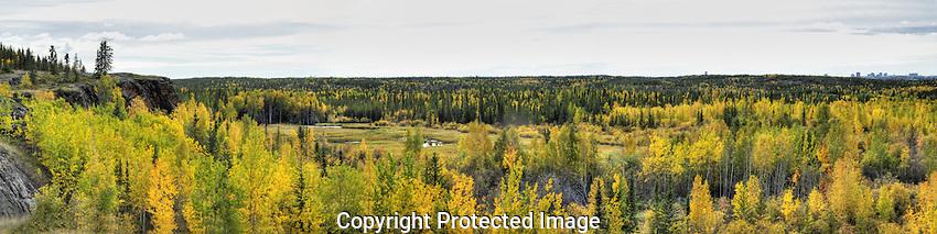 September leaves near Yellowknife. Original 125 MB