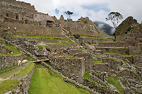 Peru, Machu Picchu, Western Urban Sector.  Workers Performing Wall Maintenance in center, Llamas grazing on left.  Intiwatana (Hitching Post of the Sun) upper center, between the trees.