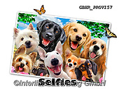 Howard, SELFIES, paintings+++++Dog Selfie,GBHRPROV157,#Selfies#, EVERYDAY