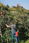 Italy, South tyrol (Alto Adige) Eppan, below district St. Pauls is Castle Warth surrounded by vineyards and apple trees at the South Tyrolean Wine Route and Eppan Castle Route, contract worker at apple crop