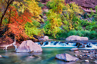 Fall colors and small falls along Virgin River. Zion National Park, Utah.