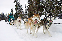 Wayne Curtis Siberian Huskies run on Finger Lake just prior to the Finger Lake checkpoint durng Iditarod 2008