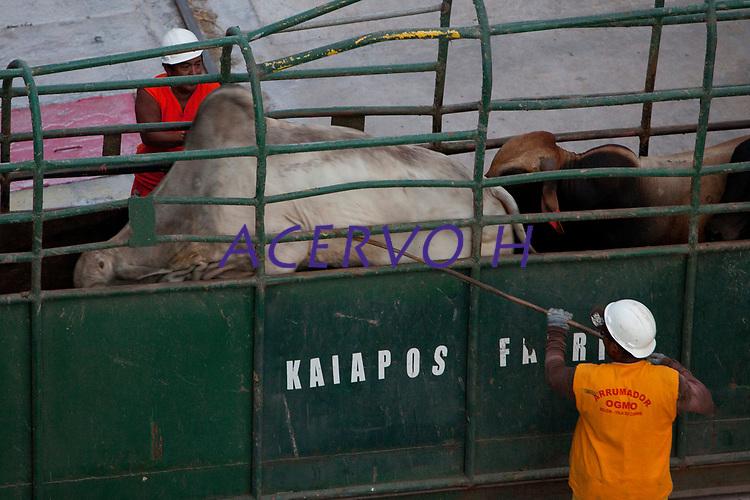 O navio MV Trigguer, de bandeira libanesa, carrega 10.200 cabeças de gado com destino a Venezuela, de onde retorna para novo carregamento, este para o Libano.  Com cinquenta tripulantes sírios e capacidade para transportar mais de  10.500 cabeças de gado. <br /> Foto Paulo Santos<br /> Porto de Vila do  Conde, Barcarena, Pará, Brasil.<br /> 07/10/2013