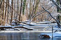 Urwald an den Göttiner Erdelöchern im Winter, Insel Töplitz, Werder/Havel, Potsdam-Mittelmark, Havelland, Brandenburg, Deutschland