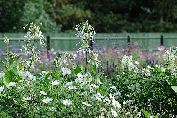 White Planting including Cleome, Cosmos, Nicotiana