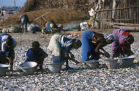 "Südasien Asien Indien IND .Frauen trocknen Trockenfisch am Strand - Fischerei Fischer Fisch Meer Meeresnutzung Überfischung Fischbestände Nahrung Einkommen Trocknung xagndaz | .South Asia India Nagapattinam .women dry fish at Beach - fishery fisheries fish fishermen fisherman fishing catch fish food sea seafood .| [ copyright (c) Joerg Boethling / agenda , Veroeffentlichung nur gegen Honorar und Belegexemplar an / publication only with royalties and copy to:  agenda PG   Rothestr. 66   Germany D-22765 Hamburg   ph. ++49 40 391 907 14   e-mail: boethling@agenda-fototext.de   www.agenda-fototext.de   Bank: Hamburger Sparkasse  BLZ 200 505 50  Kto. 1281 120 178   IBAN: DE96 2005 0550 1281 1201 78   BIC: ""HASPDEHH"" ,  WEITERE MOTIVE ZU DIESEM THEMA SIND VORHANDEN!! MORE PICTURES ON THIS SUBJECT AVAILABLE!! INDIA PHOTO ARCHIVE: http://www.visualindia.net ] [#0,26,121#]"