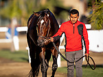 OCT 25: Breeders' Cup Sprint entrant Mitole, trained by Steven M. Asmussen, at Santa Anita Park in Arcadia, California on Oct 25, 2019. Evers/Eclipse Sportswire/Breeders' Cup