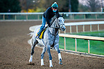 November 3, 2020: Tacitus, trained by trainer William I. Mott, exercises in preparation for the Breeders' Cup Classic at Keeneland Racetrack in Lexington, Kentucky on November 3, 2020. Jon Durr/Eclipse Sportswire/Breeders Cup
