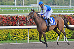 14 February 2010: Upperline with E. Baird in the Coconut Grove Stakes at Gulfstream Park in Hallandale Beach, FL.