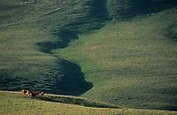 Europe/France/Auvergne/63/Puy-de-Dôme/Parc Régional des Volcans/Env des Monts Dores: Paturages au Col de la Croix Saint Robert
