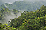 """A virgin forest in Mt. Rano high up in the clouds (with Imbu meaning mist or fog) at 380 meters above sea level in KolombangaraI sland.  Kolombangara, roughly meaning """"Water Lord"""", is a crater mountain that peaks at 1,770 meters with 80 rivers and streams running through it."""