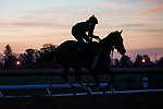 November 5, 2020: A racehorse exercises on the track during morning workouts at Keeneland Racetrack in Lexington, Kentucky on November 5, 2020. Scott Serio/Eclipse Sportswire/Breeders Cup/CSM