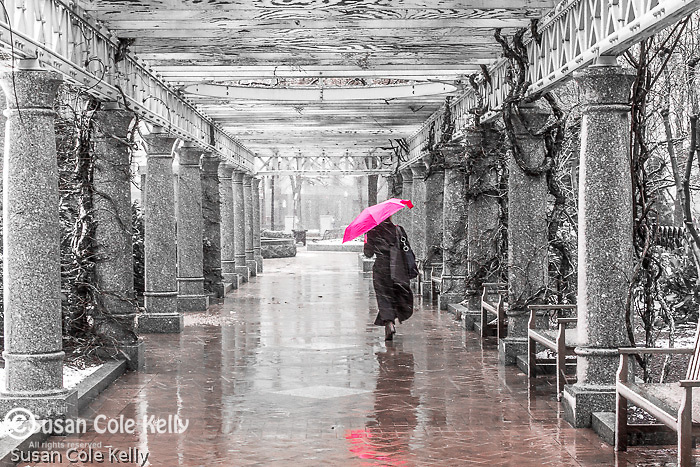 Pink umbrella in a storm at the Park at Post Office Square, Boston, Massachusetts, USA