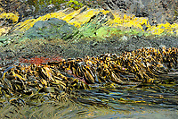 SOUTH GEORGIA<br />