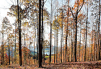 A view through the trees down onto Lake Watauga, a Tennessee Valley Authority lake located in Northeastern Tennessee.