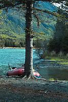 A raft nestles behind a tree at a campsite along Alaska's Kenai River.