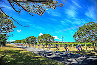 The peleton rounds the Martinborough circuit during stage three of the NZ Cycle Classic UCI Oceania Tour in Wairarapa, New Zealand on Tuesday, 24 January 2017. Photo: Dave Lintott / lintottphoto.co.nz