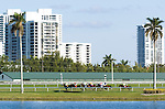 20 March 2010: The Appleton Stakes at Gulfstream Park in Hallandale Beach, FL.